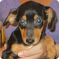 Adopt A Pet :: Santiago - Greenville, RI