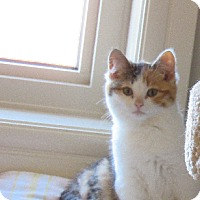 Adopt A Pet :: Katie - Edmonton, AB