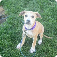 Adopt A Pet :: Candy - Meridian, ID