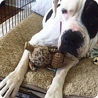 Adopt A Pet :: Baby - Allentown, PA