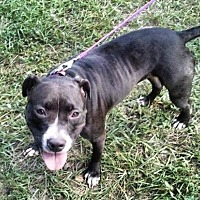 Adopt A Pet :: Mia - Lake Placid, FL