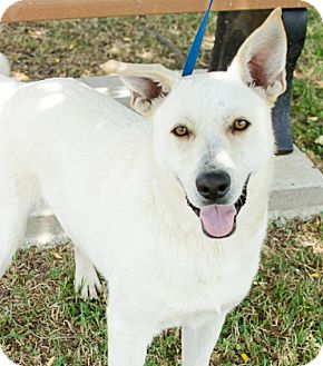 German Shepherd Dog Mix Dog for adoption in Brownsboro, Alabama - Bojangles