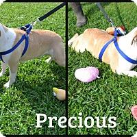 Adopt A Pet :: Precious - Beaumont, TX