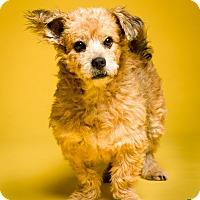 Adopt A Pet :: Hedwig - MEET ME - Norwalk, CT