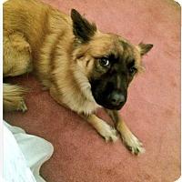 Adopt A Pet :: King - Las Vegas, NV