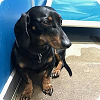Adopt A Pet :: Bandit - Humble, TX