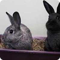 Adopt A Pet :: Sage - Woburn, MA