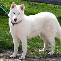Adopt A Pet :: Lumi - Harvard, IL