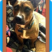 Adopt A Pet :: Sampson - Murrieta, CA