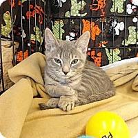 Adopt A Pet :: Daxter - Phoenix, AZ