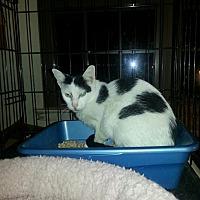 Adopt A Pet :: X-post Tuffy - Brooklyn, NY