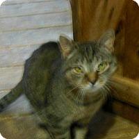 Adopt A Pet :: Millie - Sanford, ME