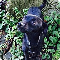 Adopt A Pet :: Sonny - Gig Harbor, WA