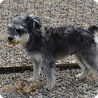 Adopt A Pet :: Dixie - Prole, IA