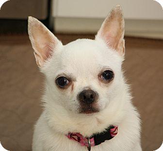 Chihuahua Mix Dog for adoption in Greensboro, North Carolina - Pearl