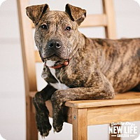 Adopt A Pet :: Meatball - Portland, OR