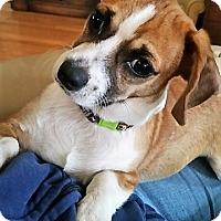 Adopt A Pet :: Sam - Kilmarnock, VA