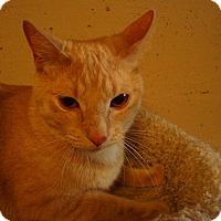 Adopt A Pet :: Duffy - Bridgeton, MO