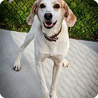 Adopt A Pet :: Butch - Prince George, VA