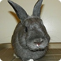 Adopt A Pet :: Rory - North Gower, ON