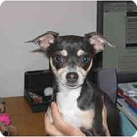 Adopt A Pet :: Sadie - Lake Forest, CA