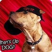Adopt A Pet :: Dozer**ADOPTED** - Lumberton, TX