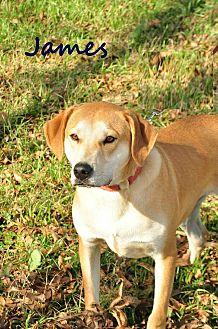 Hound (Unknown Type) Mix Dog for adoption in Davis, Oklahoma - James OKs31