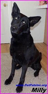 German Shepherd Dog Mix Dog for adoption in Hawk Springs, Wyoming - Milly