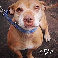 Adopt A Pet :: Rubie - Vernon, CT