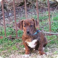 Adopt A Pet :: KIXX - Hartford, CT