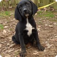 Adopt A Pet :: Kiki - Hartford, CT