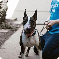 Adopt A Pet :: Chico - Chino Hills - Chino Hills, CA