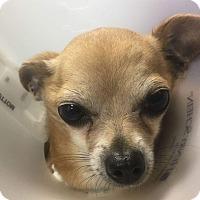 Adopt A Pet :: Charlie - Pottsville, PA