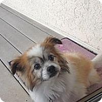 Adopt A Pet :: Chad - Rescue, CA