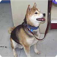 Adopt A Pet :: Nipper - Scottsdale, AZ