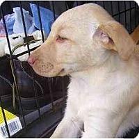 Adopt A Pet :: Liberty - Chandler, IN