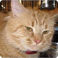 Adopt A Pet :: Rusty - Riverside, RI