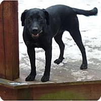 Adopt A Pet :: Cheyenne - E Windsor, CT