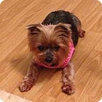Adopt A Pet :: Ally Cat - Jacksonville, FL