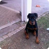 Adopt A Pet :: TAMMY - Higley, AZ