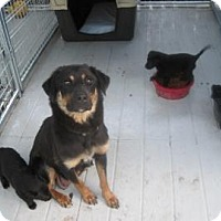 Adopt A Pet :: Tracy - New palestine, IN