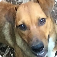Labrador Retriever Mix Dog for adoption in Columbia, South Carolina - Dixie