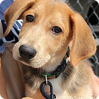 Adopt A Pet :: Teddy - Bedford, VA