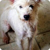 Adopt A Pet :: Vicki - Ft. Lauderdale, FL