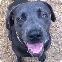 Adopt A Pet :: Coleman - Austin, TX
