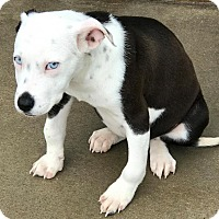 Adopt A Pet :: Madison - Irmo, SC