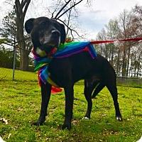 Adopt A Pet :: Rufus - Lebanon, ME