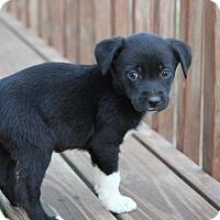Adopt A Pet :: Lenny - Westport, CT