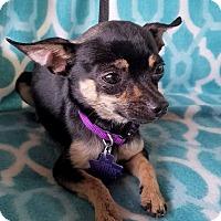 Adopt A Pet :: Tobin - Allentown, PA