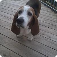 Adopt A Pet :: Daisy - Barrington, IL